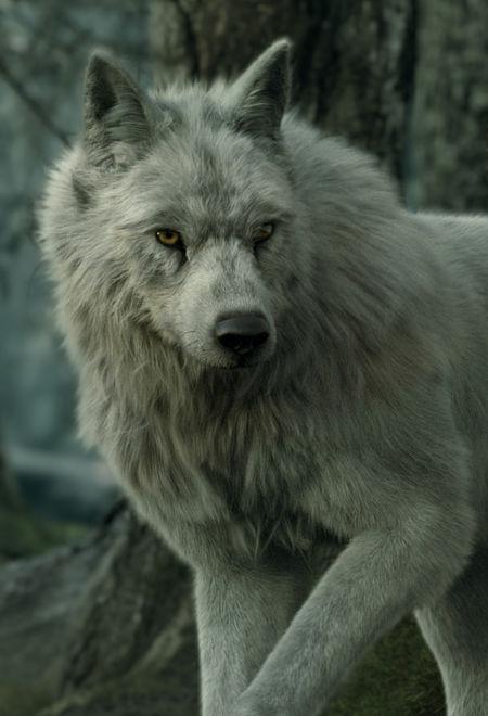 Alireza akhbari wolf 363c8e84 2j6v