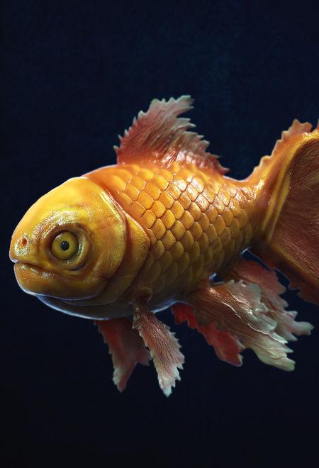 Surajit3d oroto2 dot 0 cg fish ffdf34b1 4ypv