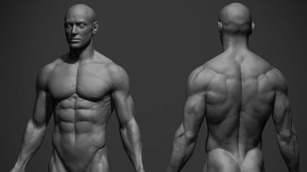 Male Anatomy Reference