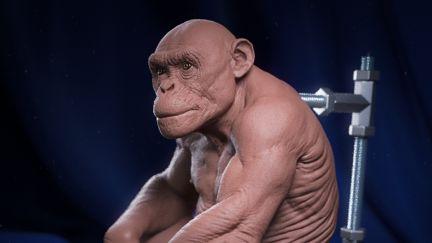 Clay Chimp
