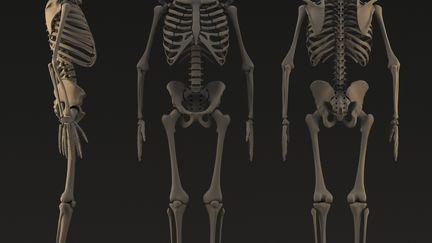 Skeleton Prectice