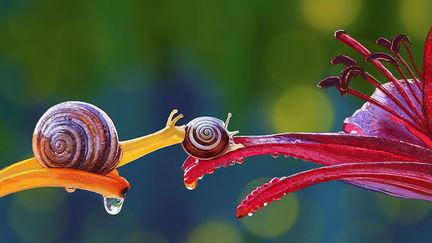 Snails Study 2
