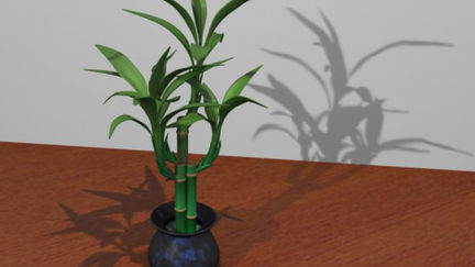 Bamboo with Texture