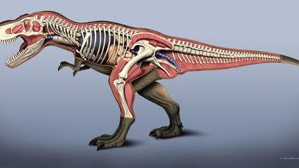 T-Rex anatomy
