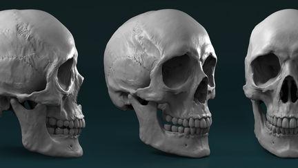 Female skull sculpture work in progress