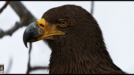 An eagle model done for a cinematic trailer