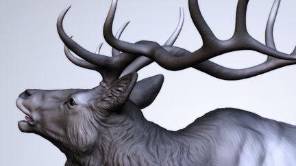 Season of the Elk