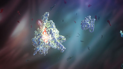 Aromatase in Action