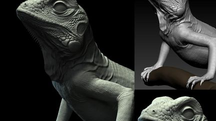 Green Iguana (Dong808)