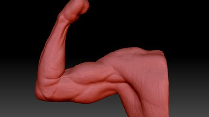 arm study