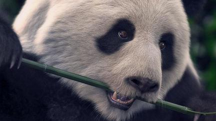 Panda test