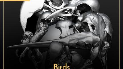 Birds_Scanned Skulls_IMM Brush