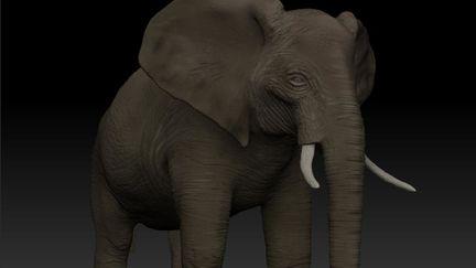 Elephant modeling