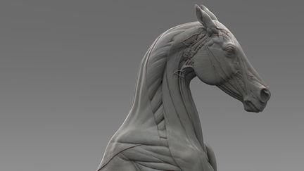 Horse Ecorche