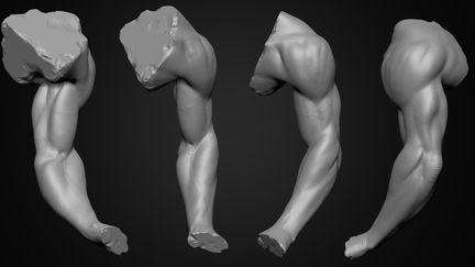 Arm Anatomy Study