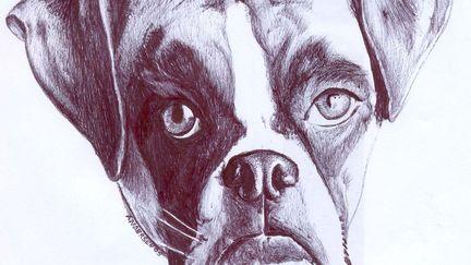Collorado Bulldog