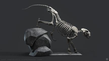 Lion Skeleton 01