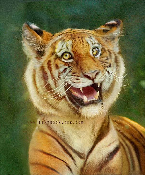 Benteschlick happy tiger characte 1 6c7f0db4 7g7j