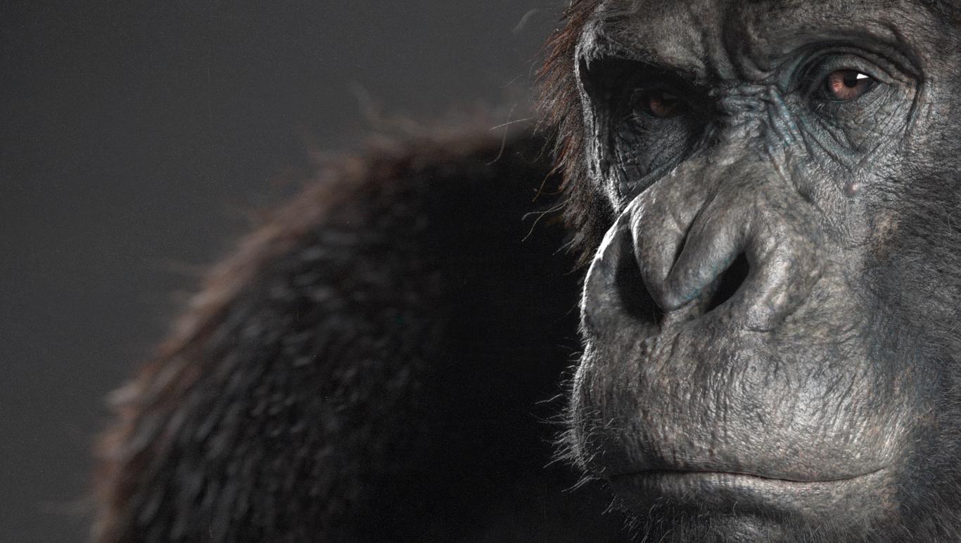 Bjar ape 1 b1f65c5f szq1