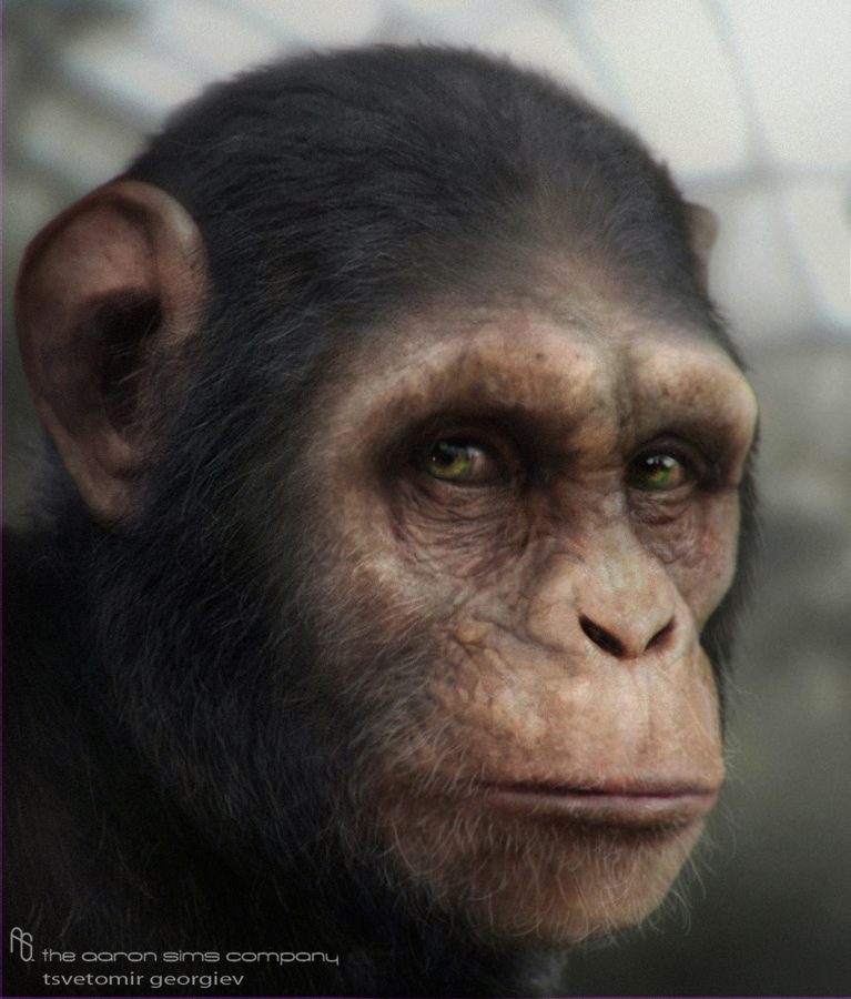 Ceco chimp3 1 8b257385 soei
