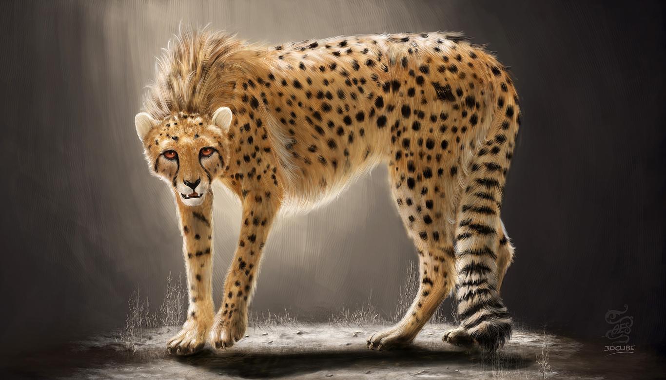 Dcube133 persian cheetah 1 ecddaf3a csda