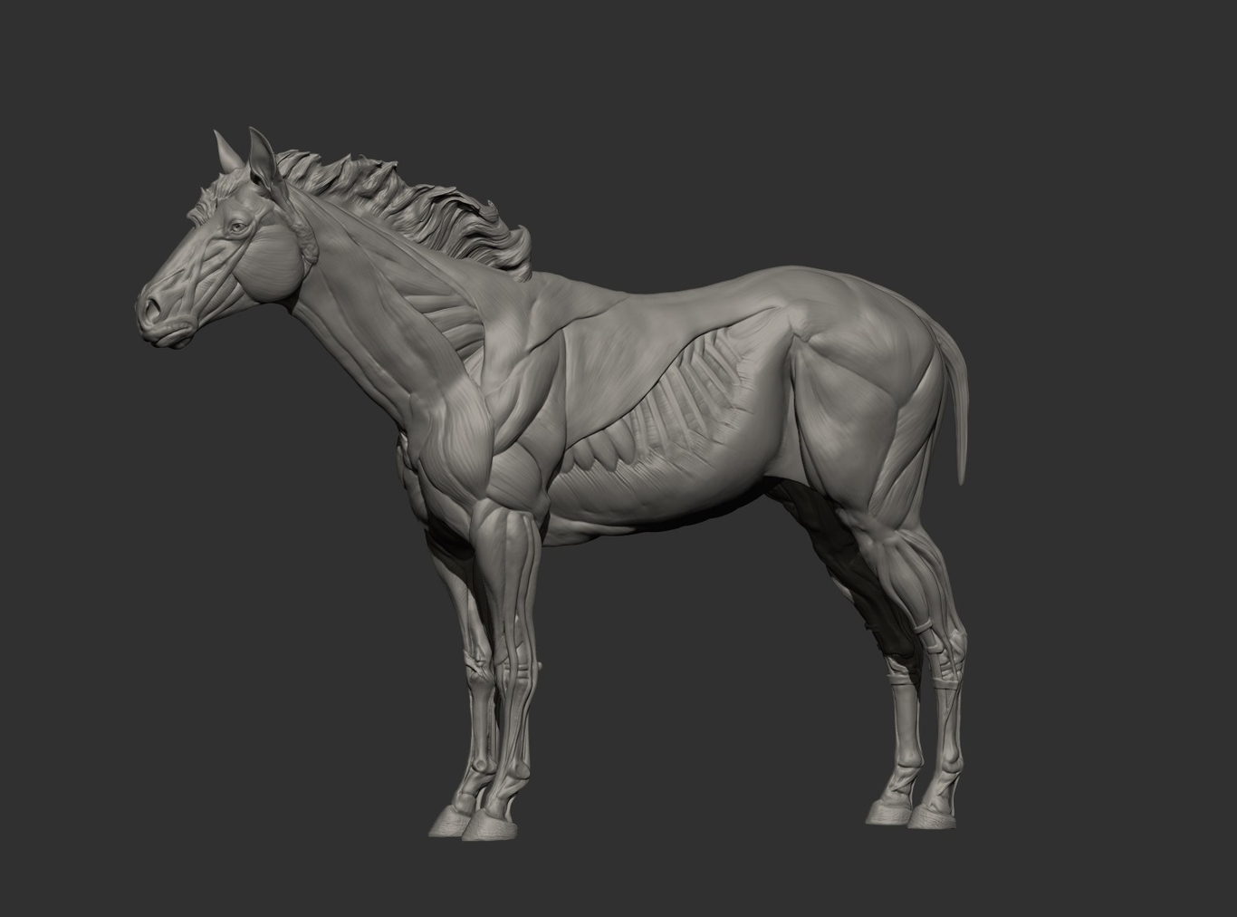 Green - Quarter Horse ecorche 3dtotal by gaelkerchy