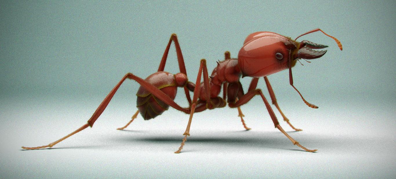 ANT (Atta laevigata) by jabjor...