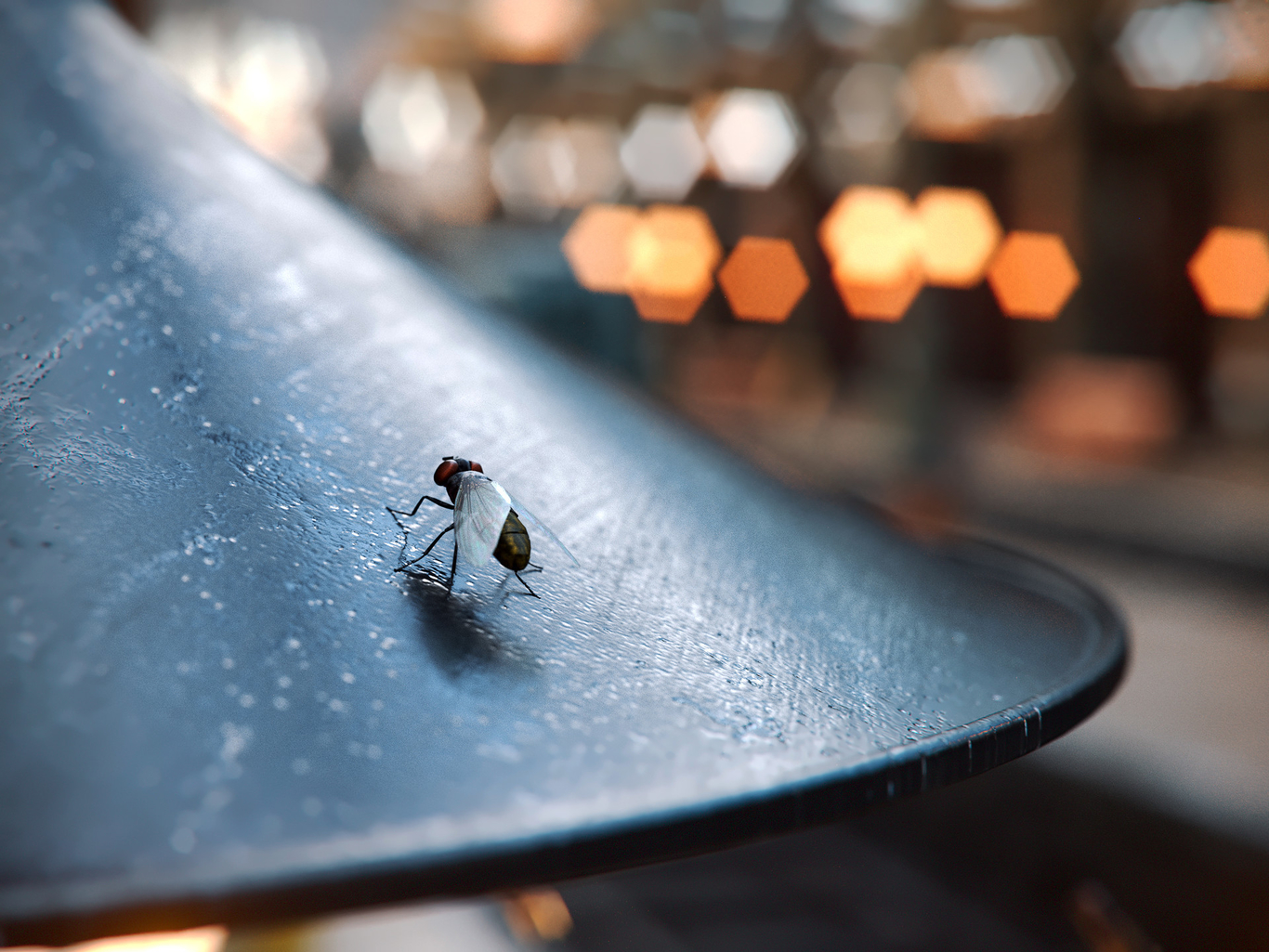 Latter fly closeup 1 4085a614 dyta