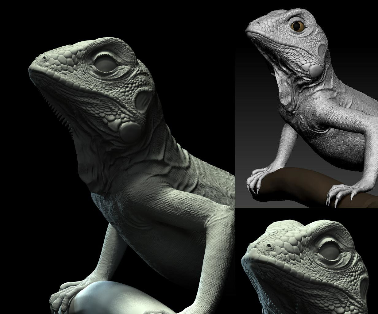 Lixiaodong green iguana dong808 1 385ab5d0 a04n
