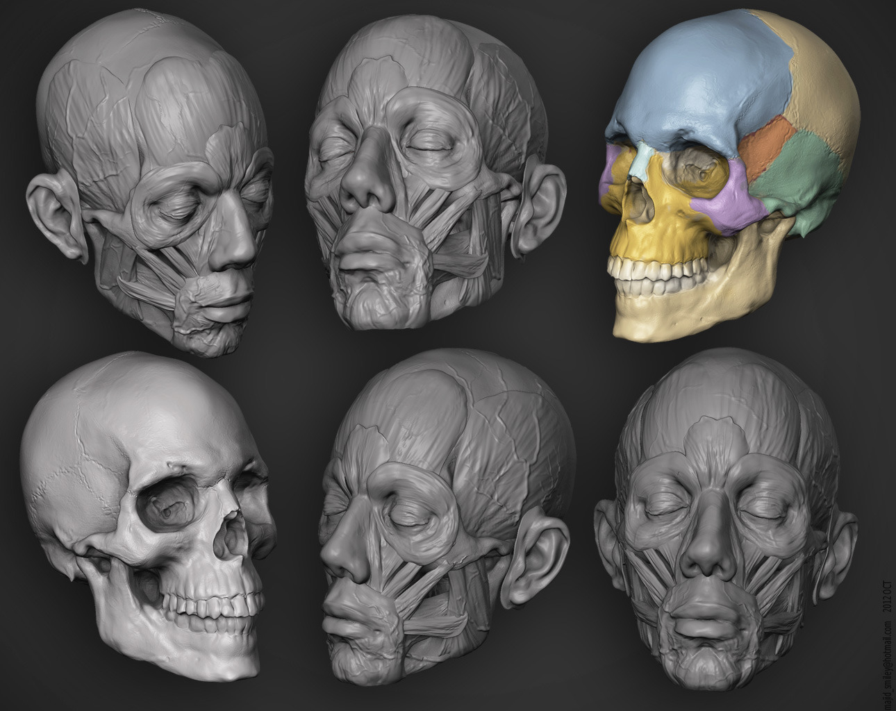 Majid smiley anatomy study 1 c6e32d29 qbfe