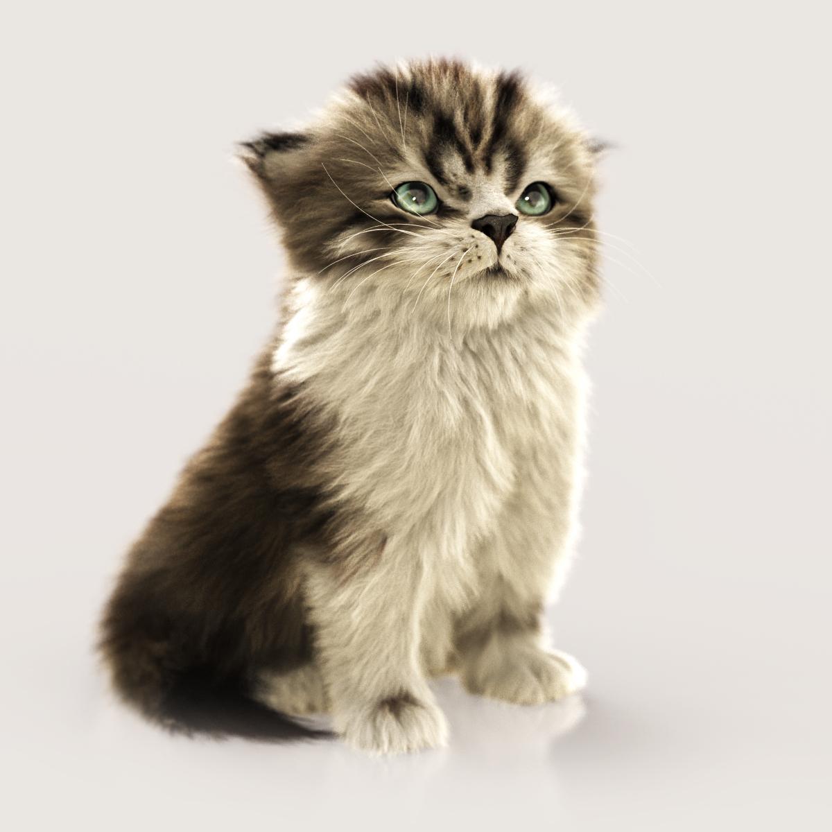 Massimorighi kitten 1 4ac20f11 nhk6
