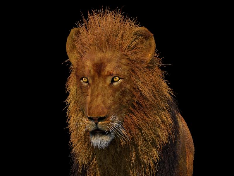 Rolazabihi lion 1 a13ad47e 7d2c